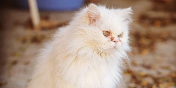 Cats of Iran project   Dr Rave`s Photography 2